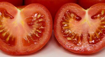 佐賀のブランドトマト『光樹(こうじゅ)とまと』