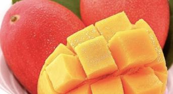 一玉入魂!宮崎完熟マンゴー「太陽のタマゴ」