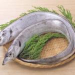 極太肉厚!千葉県竹岡産「太刀魚」