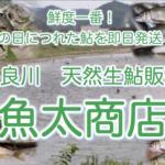鮮度一番!「天然生鮎」を即日発送!『魚太商店』