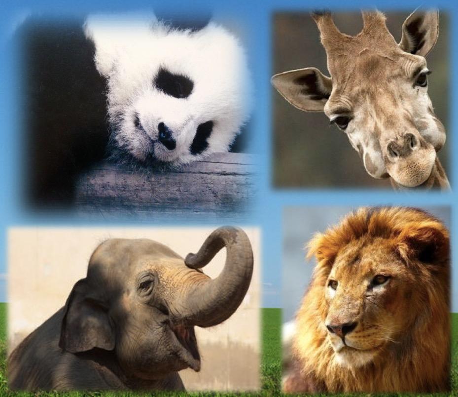 【動物の食費】人間、ゾウ、キリン、ライオン、パンダの中で、1日の食費が一番かかるのは?