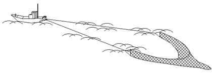 江ノ島では、どうやって「しらす」を獲るの?