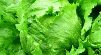 高原野菜といえば長野県川上村の高原レタス「天空のレタス」