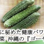 苦さに秘めた健康パワー  夏野菜 沖縄の『ゴーヤー』