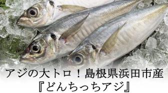 アジの大トロ!島根県浜田市産『どんちっちアジ』