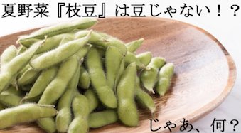 夏野菜 『枝豆』は豆じゃない!?