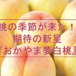 桃の季節が来た!期待の新星『おかやま夢白桃』