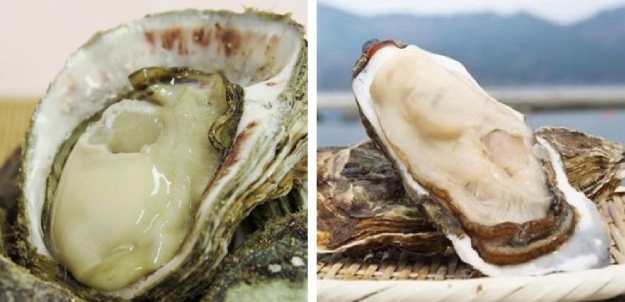 『岩牡蠣』と『真牡蠣』の違い