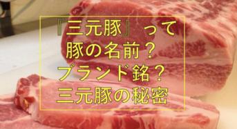 『三元豚』とは?豚の名前?ブランド銘?三元豚の秘密