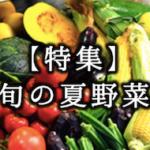 【特集】旬の夏野菜をご紹介