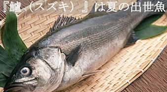 『鱸(スズキ)』は夏の出世魚