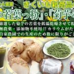 日本初!菊芋の若葉を製品化! 「菊芋の若葉っ粉」・「菊芋の若葉」