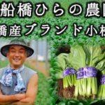 西船橋ひらの農園『船橋産ブランド小松菜』人気の秘密!