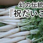 幻の伝統野菜『祝だいこん』とは何モノか