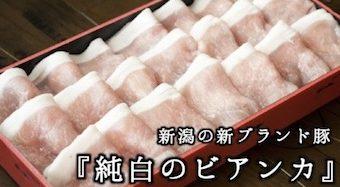 新潟の新ブランド豚「純白のビアンカ」とは?