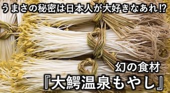 うまさの秘密は日本人が大好きなあれ!? 幻の食材『大鰐温泉もやし』