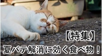 【特集】夏バテ解消に効く食べ物!