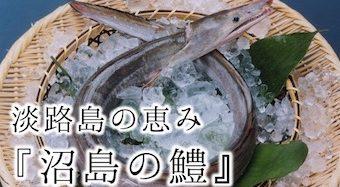 淡路島の恵み『沼島の鱧』