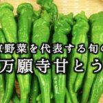 夏の京野菜を代表する旬の味覚『万願寺甘とう』