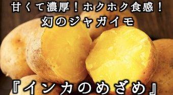 甘くて濃厚!ホクホク食感!幻のジャガイモ『インカのめざめ』