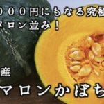 メロン以上の甘さ!究極の逸品!幻の『栗マロンかぼちゃ』
