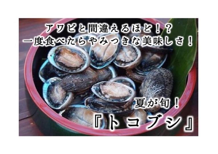 夏が旬の食材紹介!『トコブシ』はアワビよりも美味しい!?