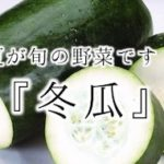 冬の瓜と書くけど、夏野菜 『冬瓜』