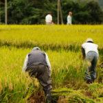 これから注目される!「植酸栽培」とはどんな農法?