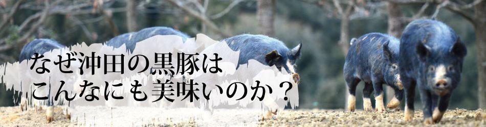 沖田黒豚牧場の黒豚の特長