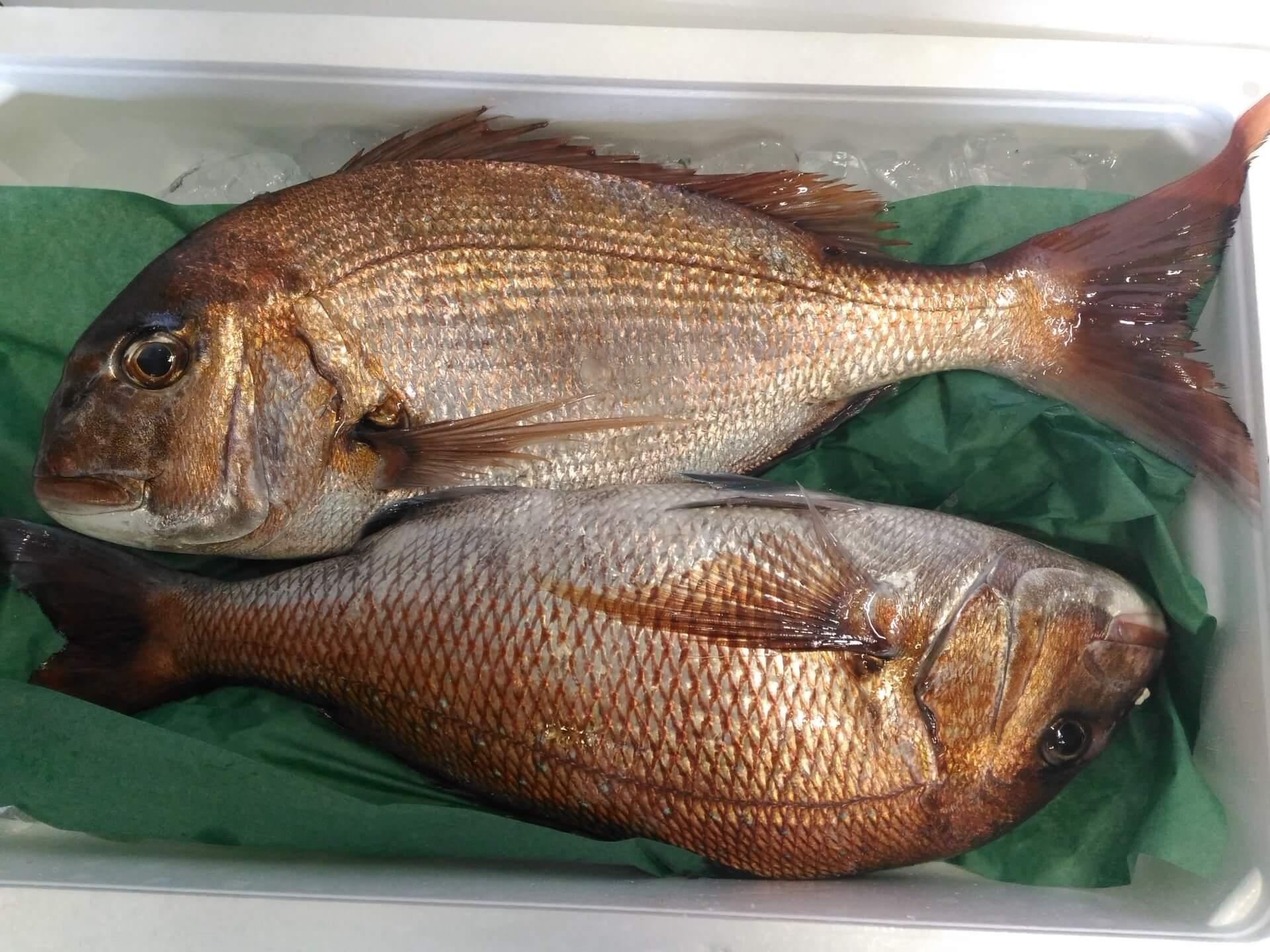 「真鯛」は弱った胃腸にもおすすめの成分が豊富