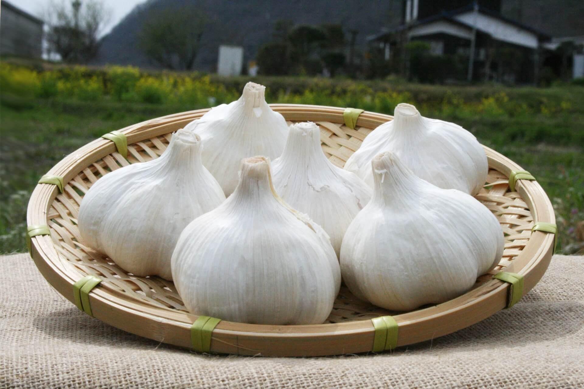青森県福地産にんにく「ホワイト六片」!女性必見の美容健康効果